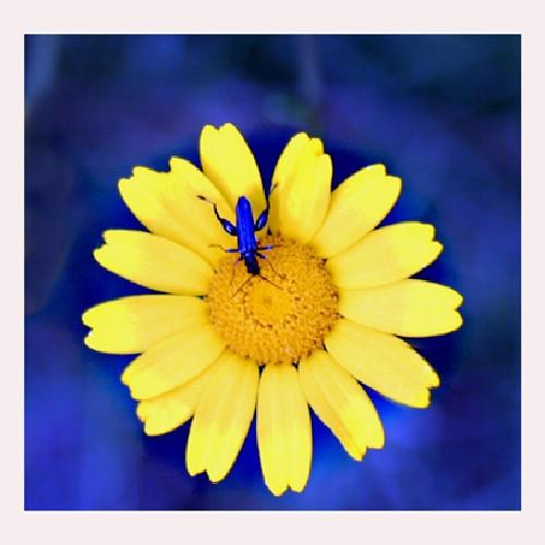 Outros/Azul,amarelo