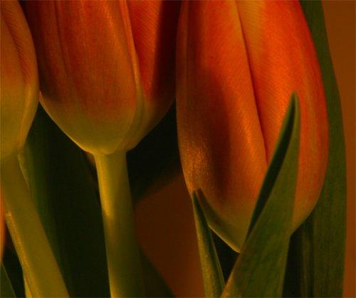 Macro/Mais flores