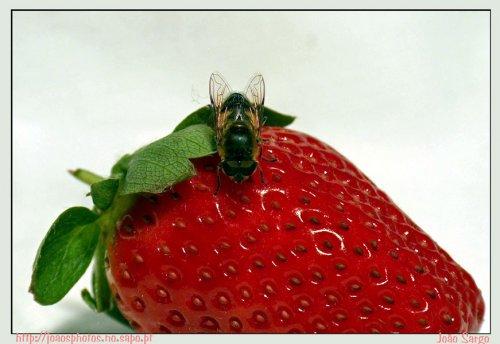 Macro/strawbery filds forever
