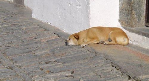 Animais/Deixem-me dormir a sesta