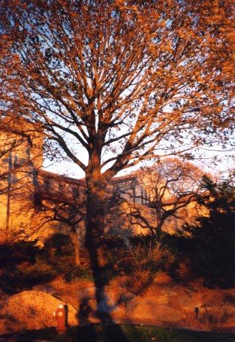 Paisagem Natural/NY Fall