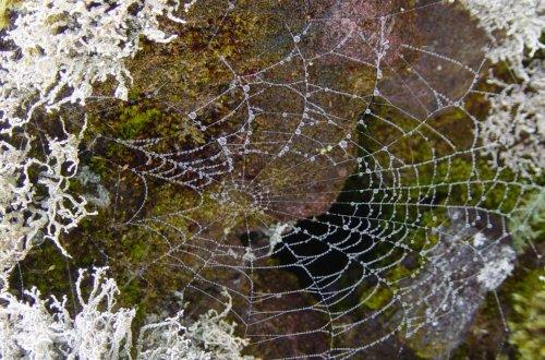 Outros/Mundo das aranhas em dia de nevoeiro.