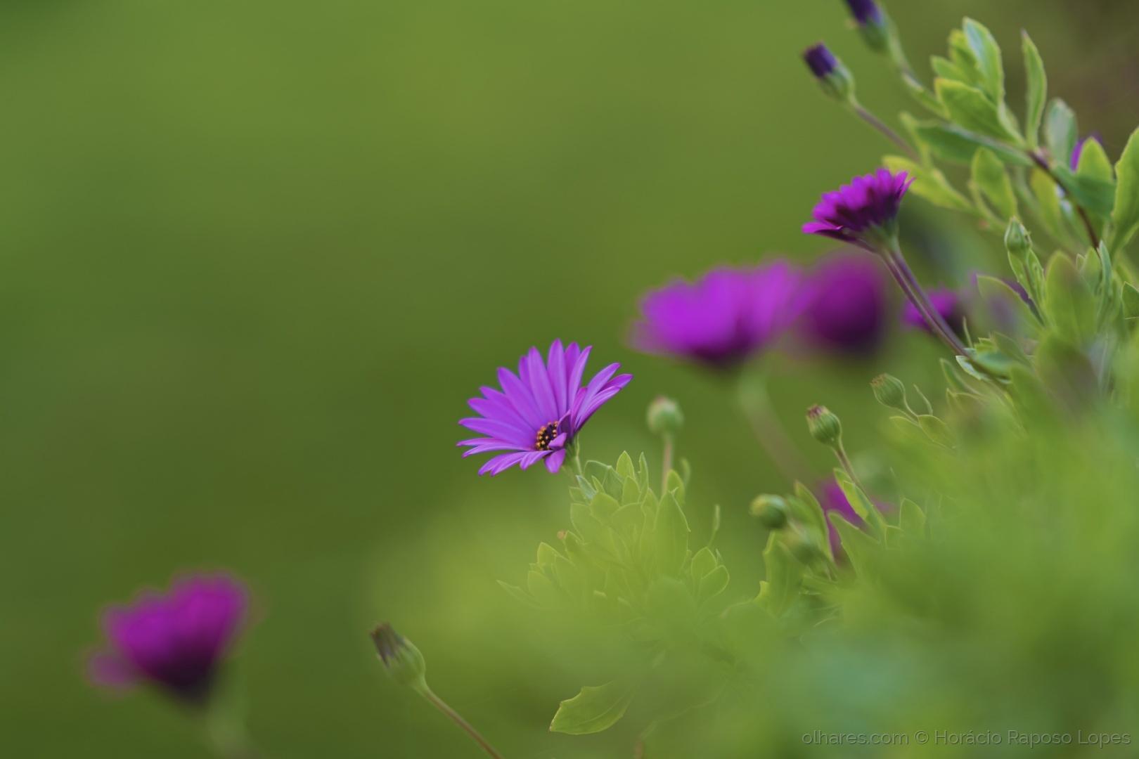 Macro/the purple in the green