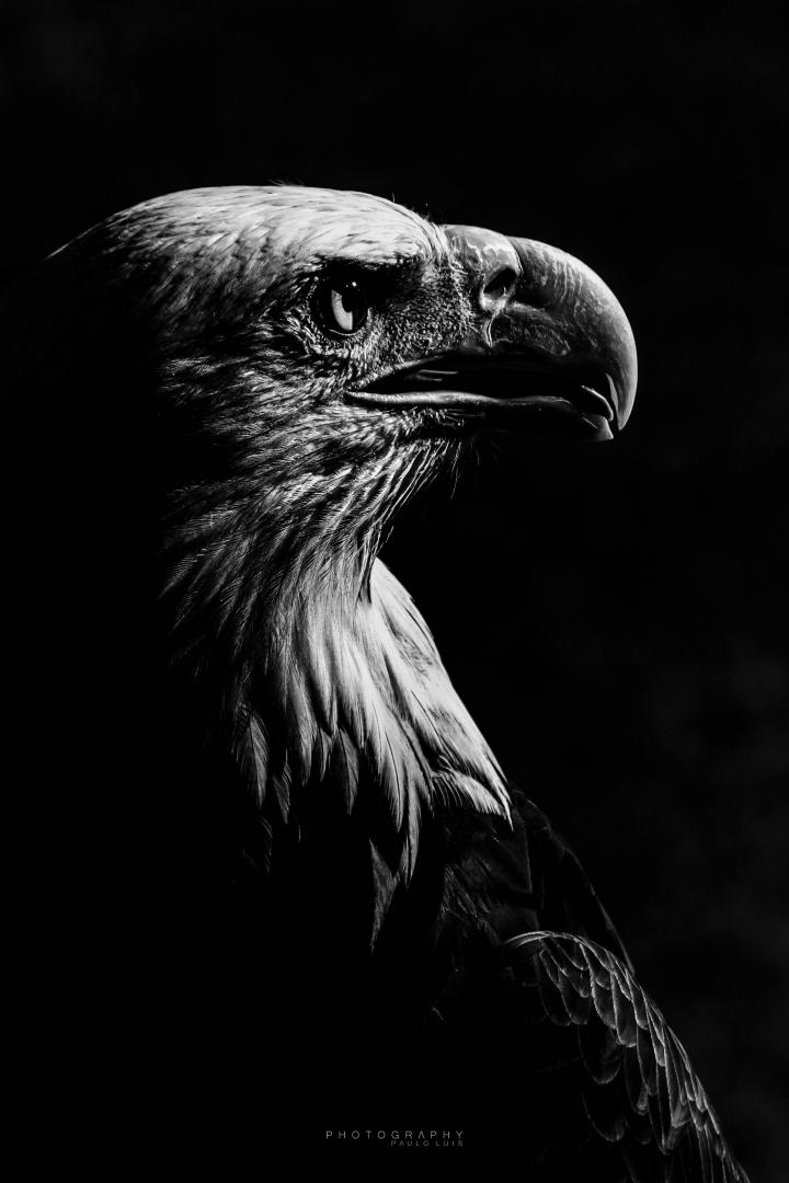 Outros/Eagle