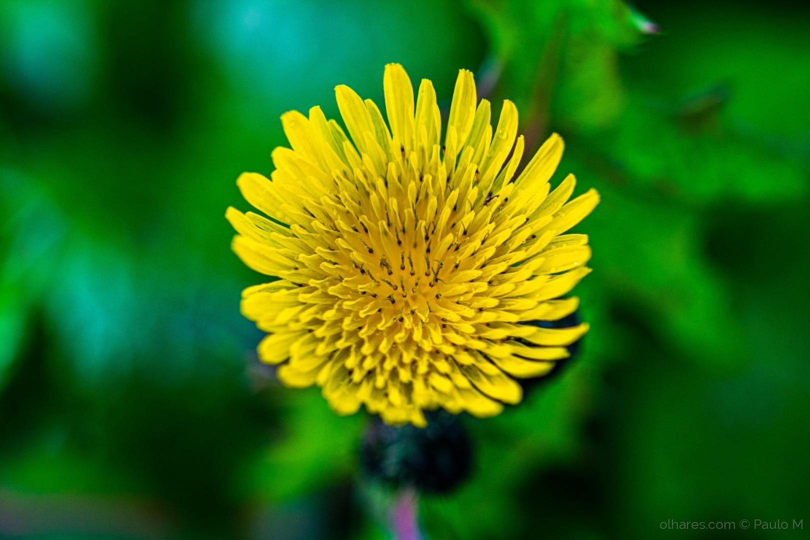 Macro/gold flower