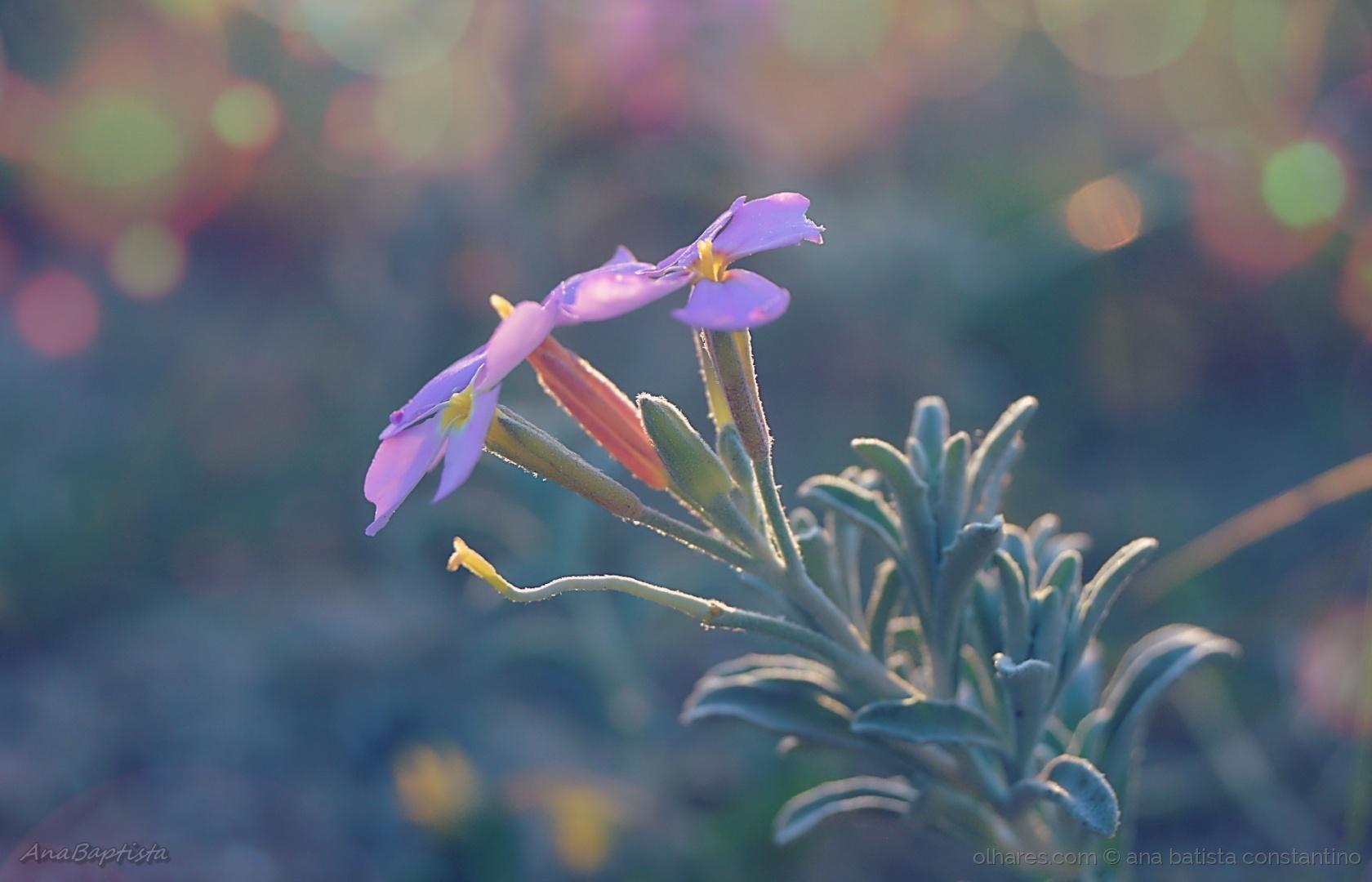 Macro/flores são como estrelas