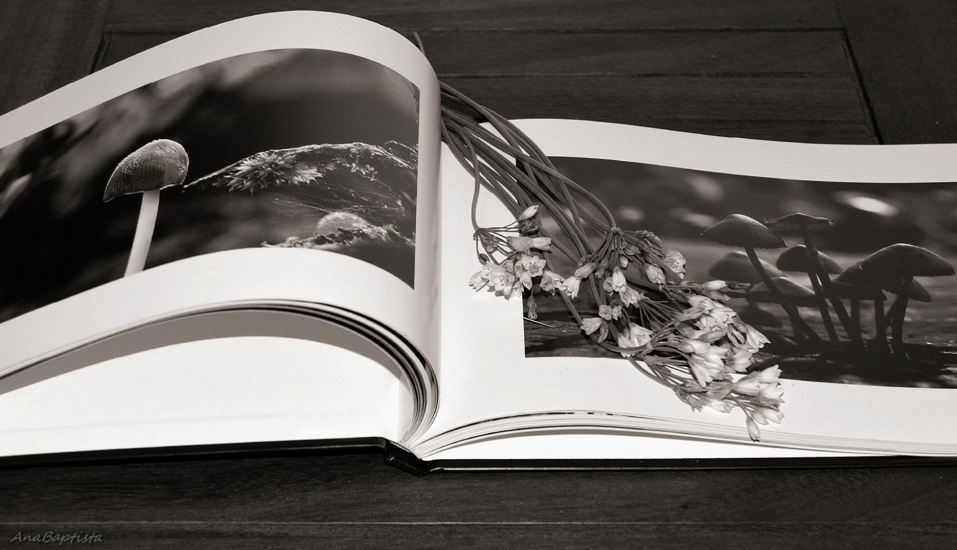 Outros/O livro