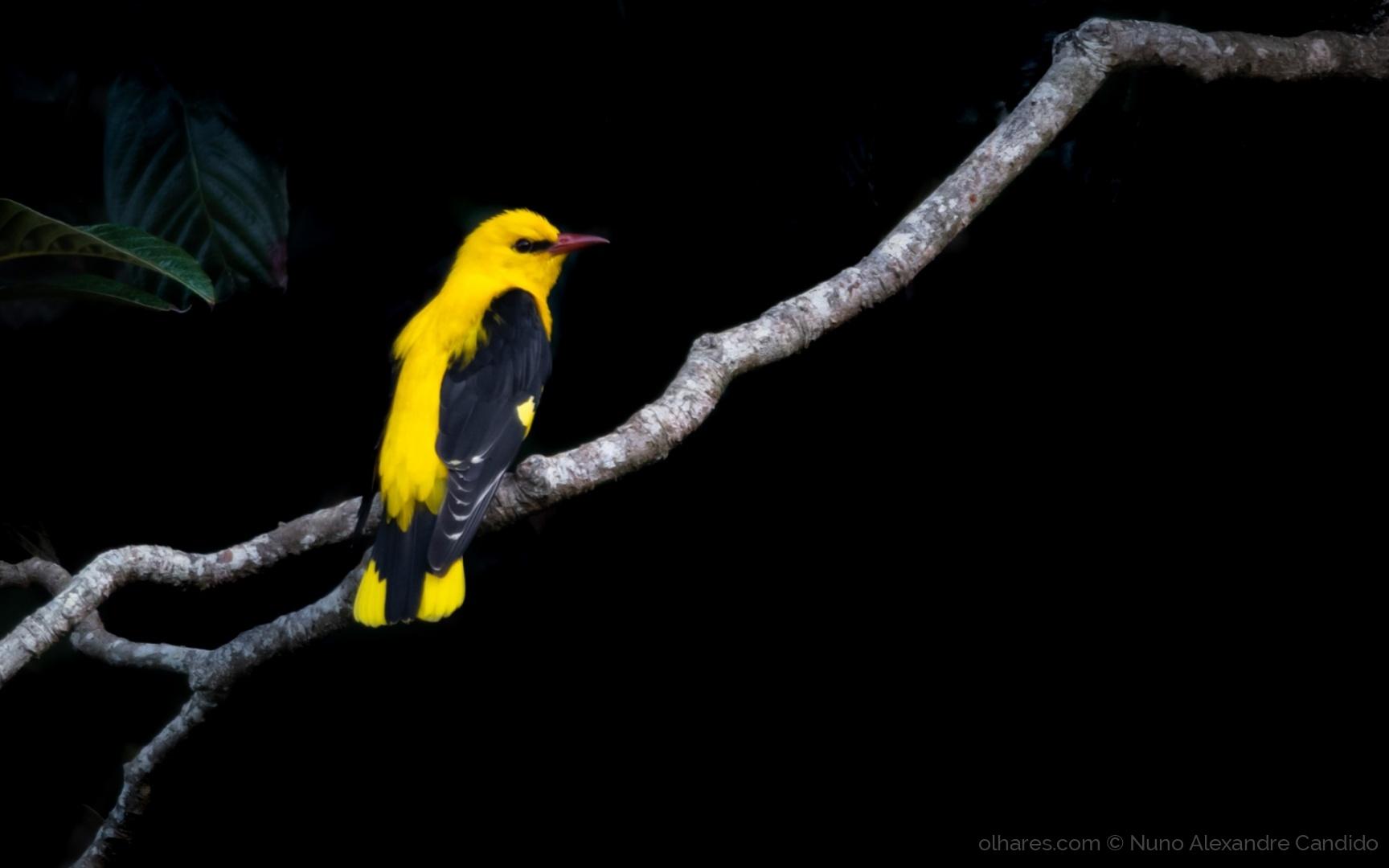 Animais/Amarelo no escuro