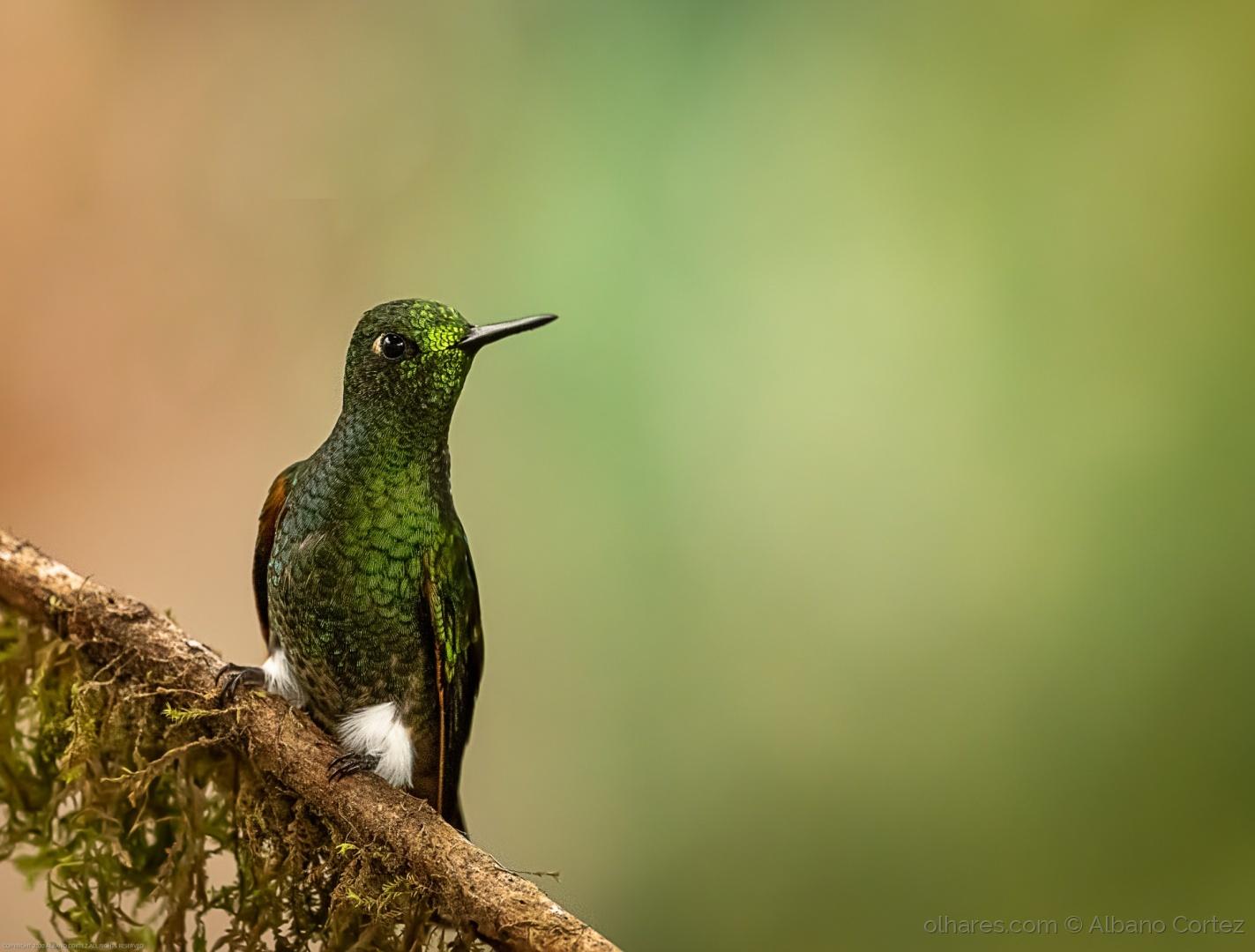 Animais/Birding