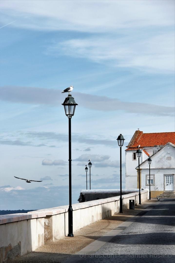 Paisagem Urbana/Um candeeiro para cada gaivota!...