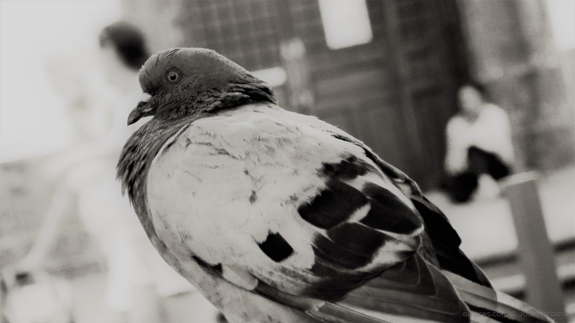 Fotografia de Rua/o Espírito do Amor e da Paz ( III )