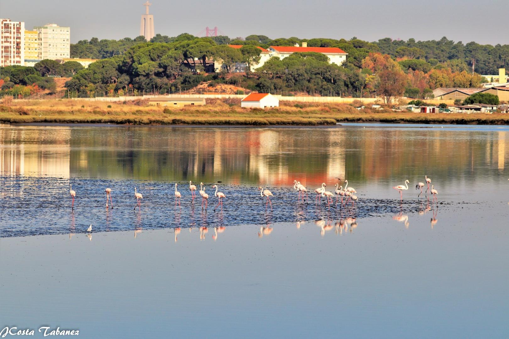 Paisagem Natural/Flamingos (Phoenicopterus roseus)