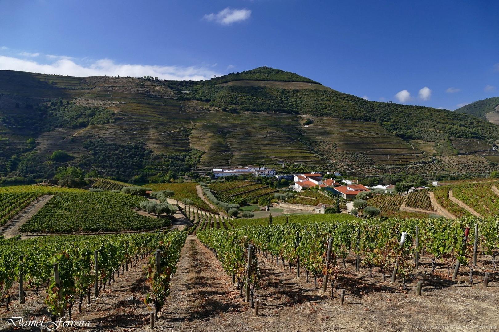Paisagem Natural/Alto Douro Vinhateiro