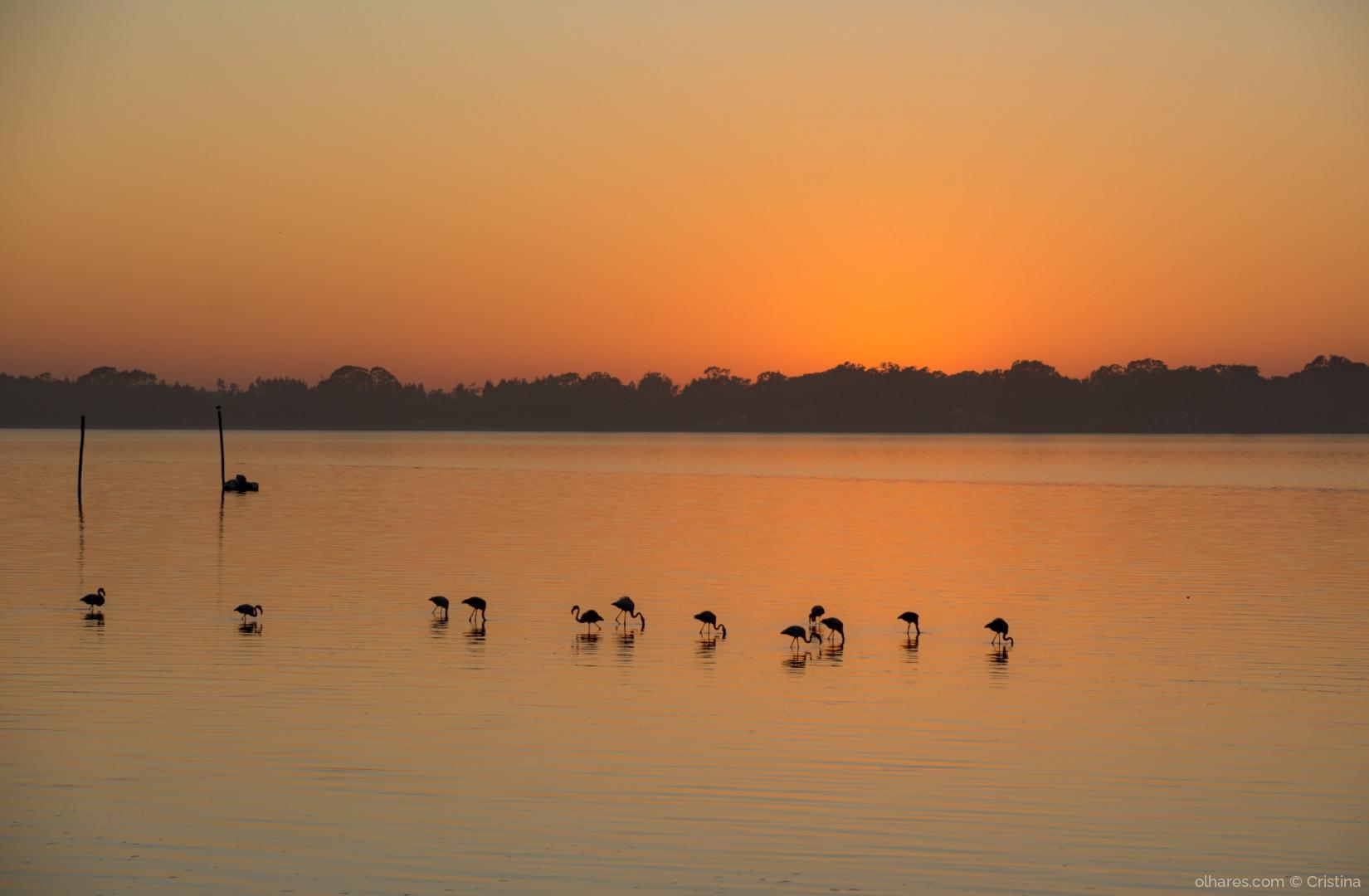 Paisagem Natural/Ocaso de flamingos
