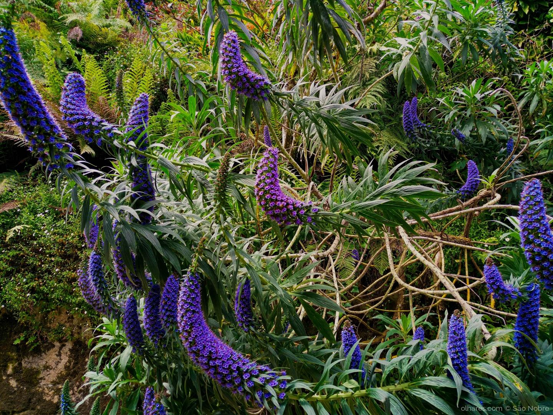 Macro/Flores da Quinta da Regaleira