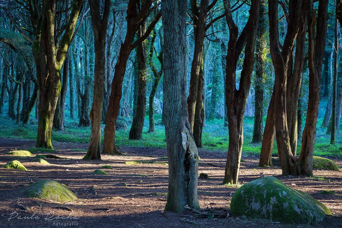 Paisagem Natural/Bosque do silêncio