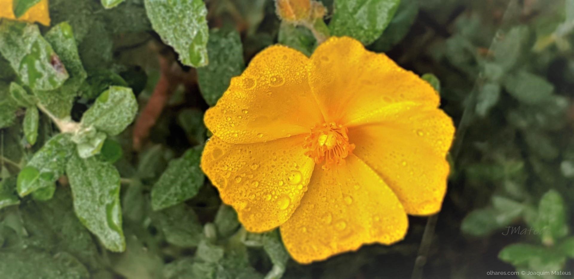 Outros/Flor do campo