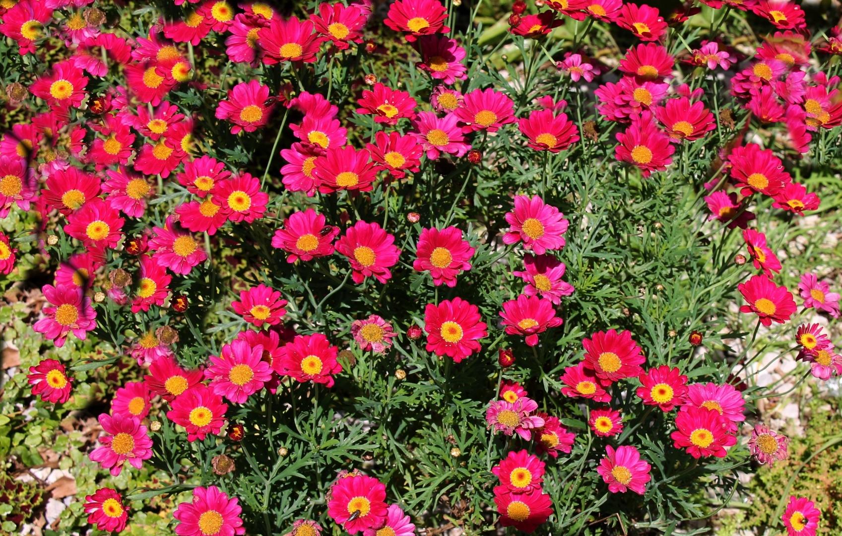 Macro/Tapete de flores.........