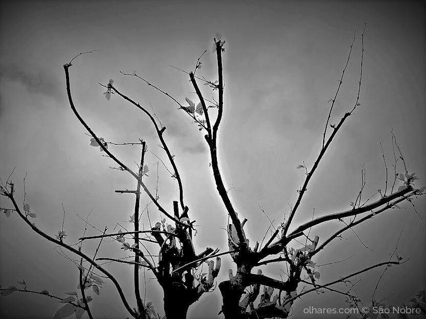 Outros/Despida de Folhas