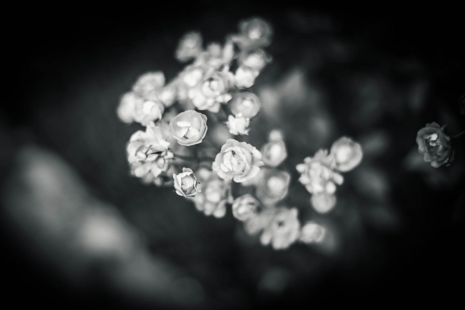 Paisagem Natural/A Beleza da dor...
