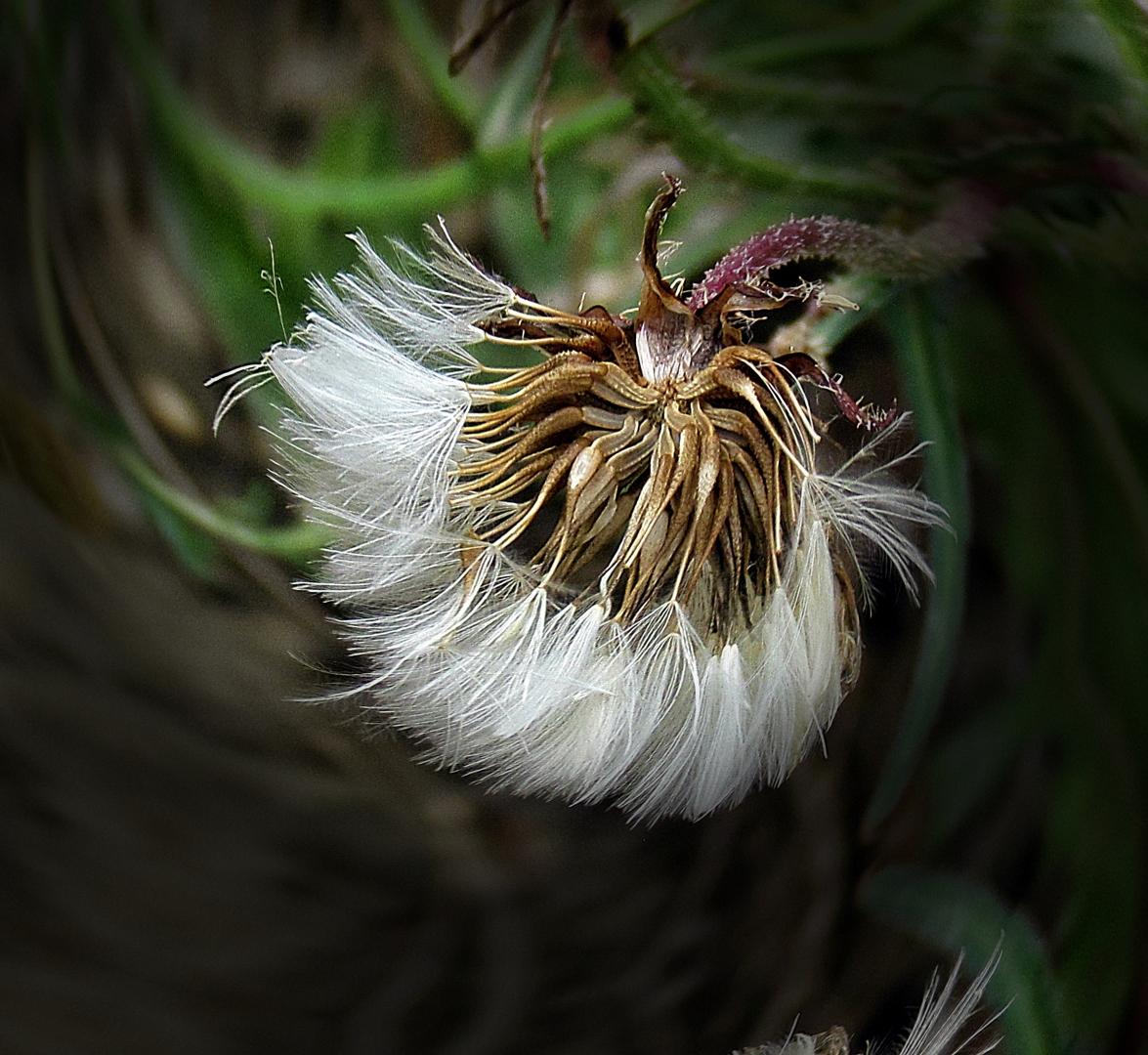 Paisagem Natural/Wind spirals