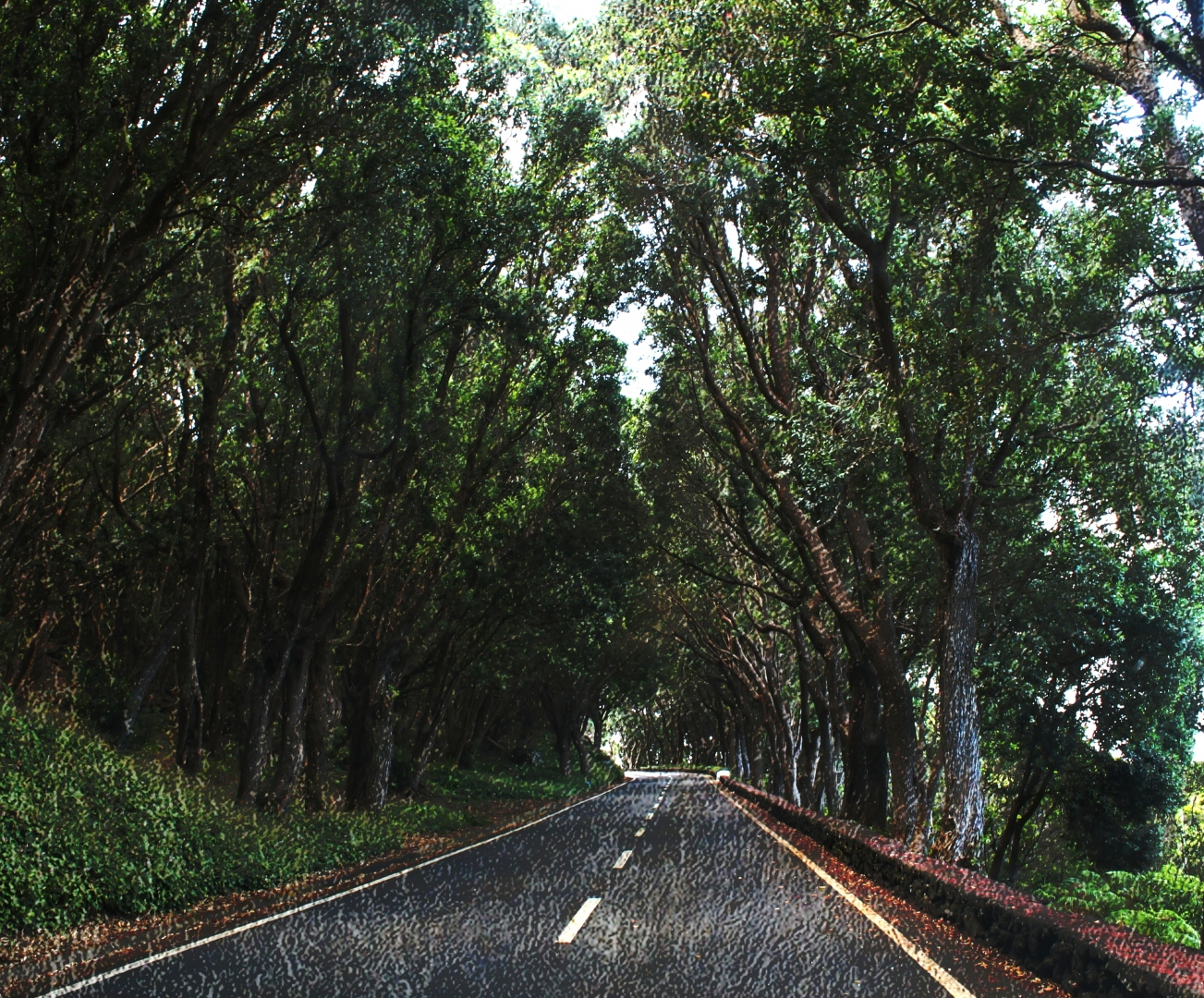 Paisagem Natural/Caminho entre árvores.........