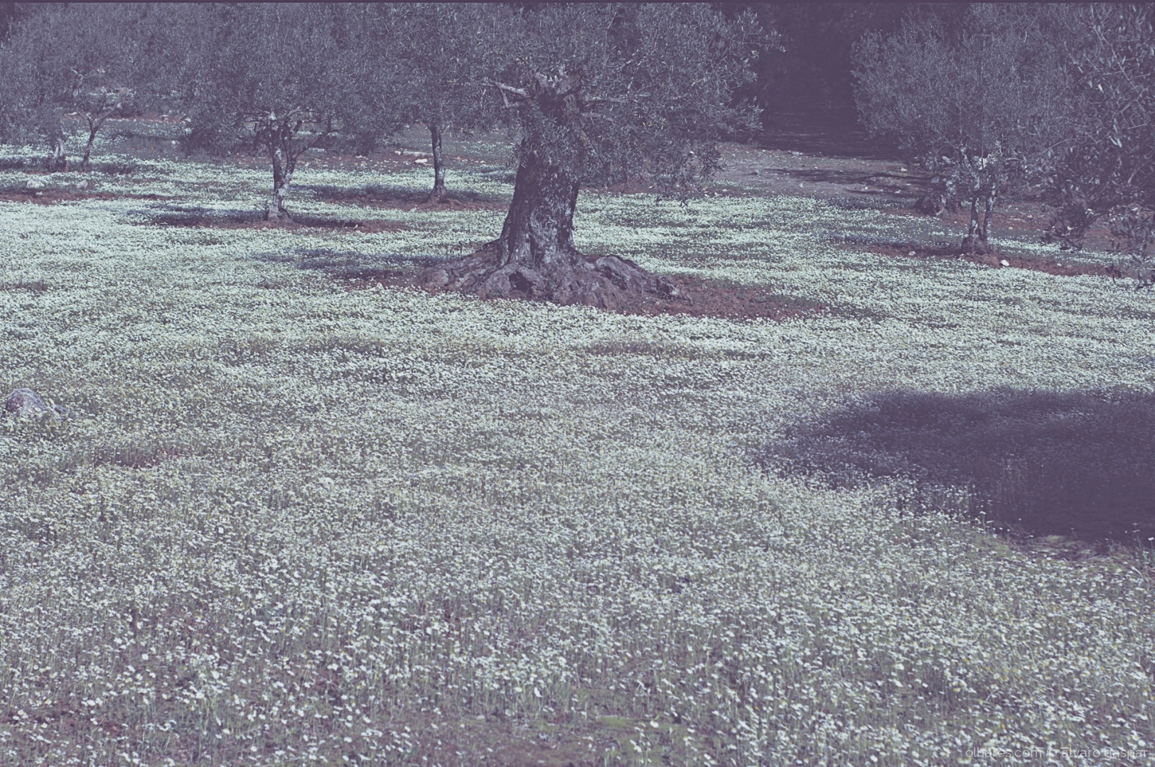 Paisagem Natural/A primavera a despontar.