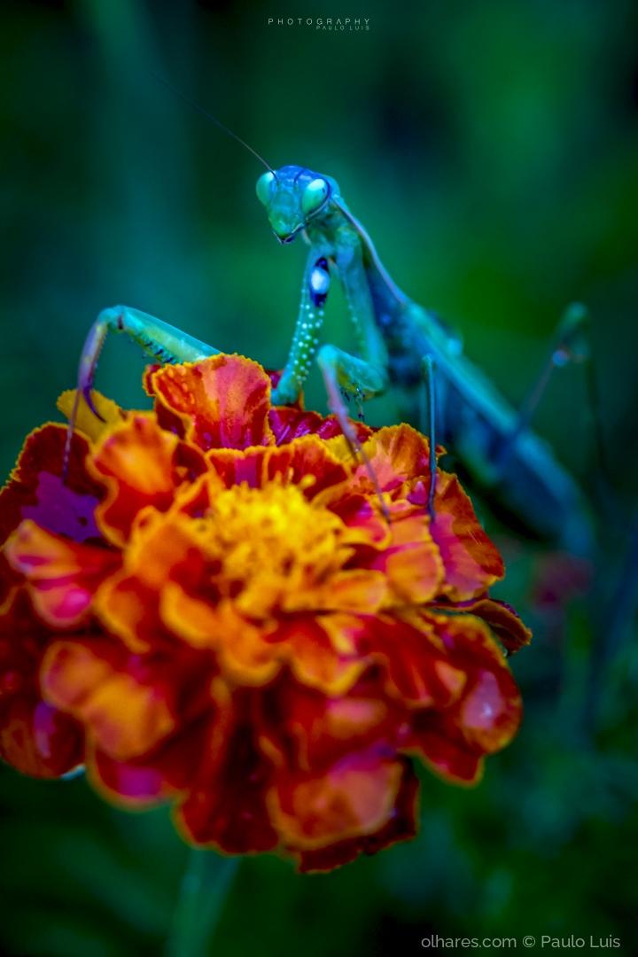 Macro/O regresso às flores
