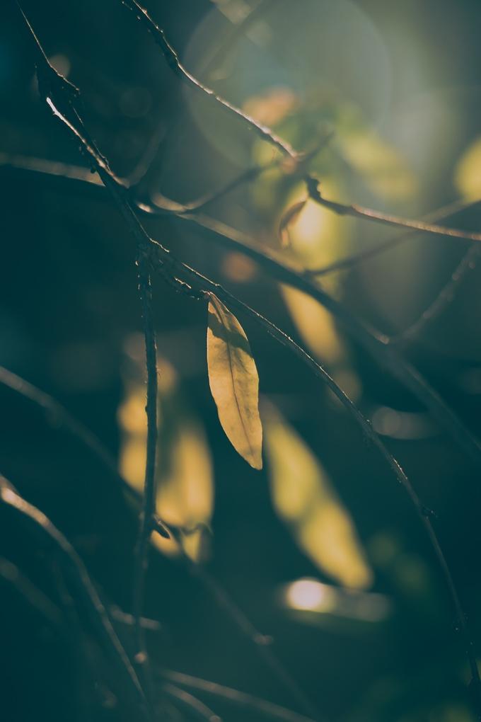 Outros/luz e folhas