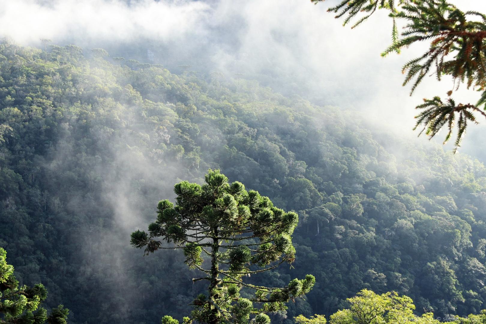 Paisagem Natural/A neblina...
