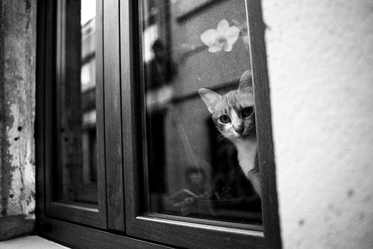 Animais/O Gato Cusco