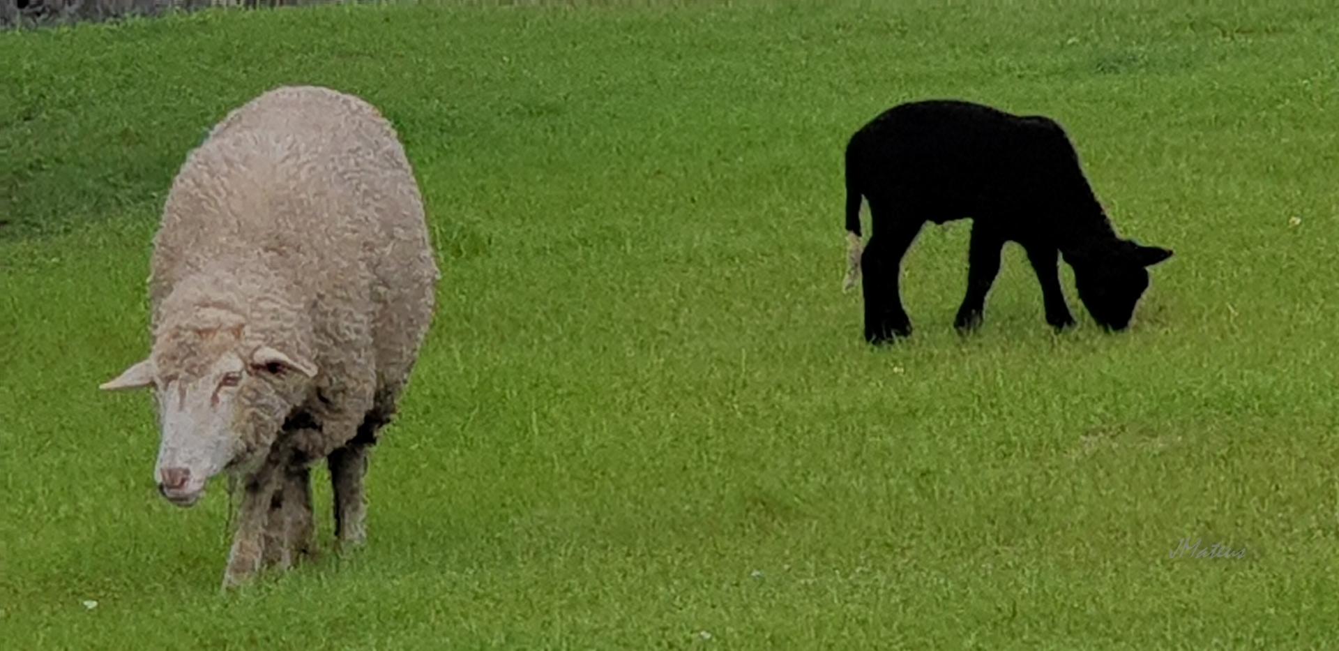 Animais/Pelo campo...