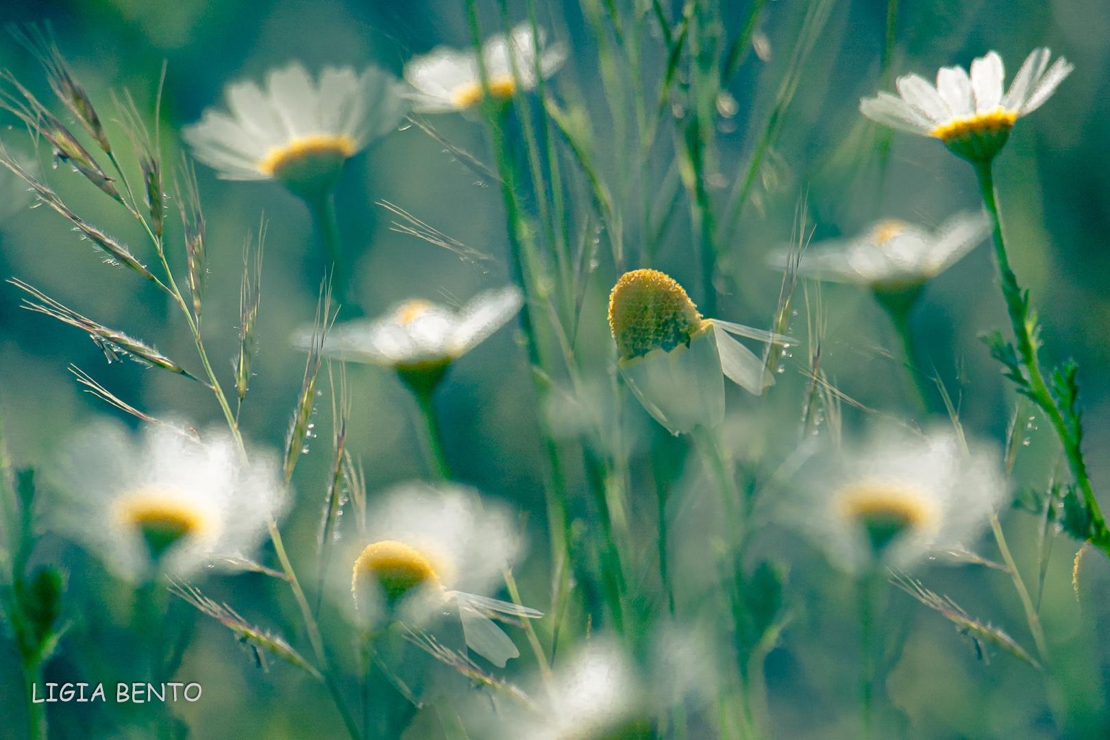 Paisagem Natural/Olhai as flores do campo