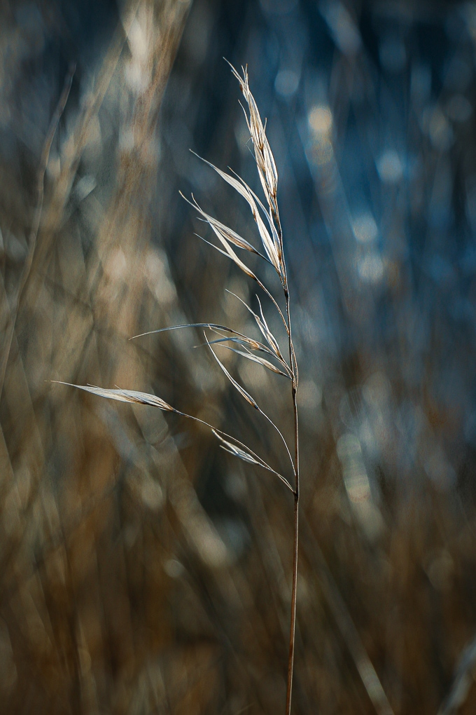 Paisagem Natural/no campo