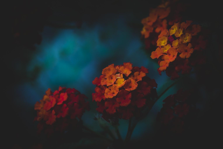 Paisagem Natural/entre os vermelhos e os laranjas