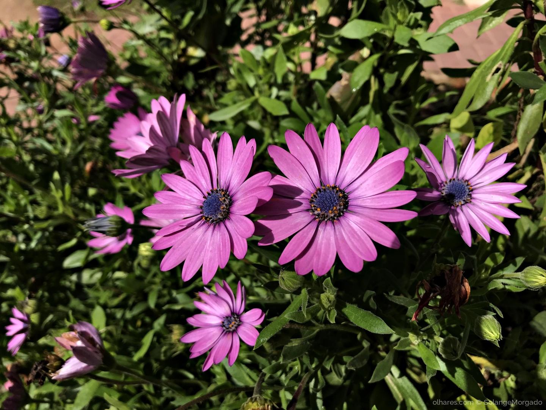 Macro/Flores ao sol