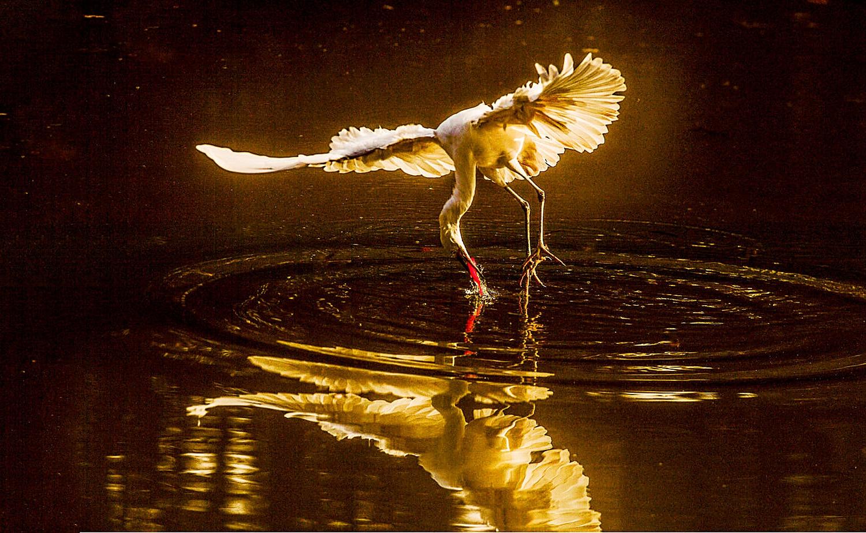 Paisagem Natural/A bailarina...