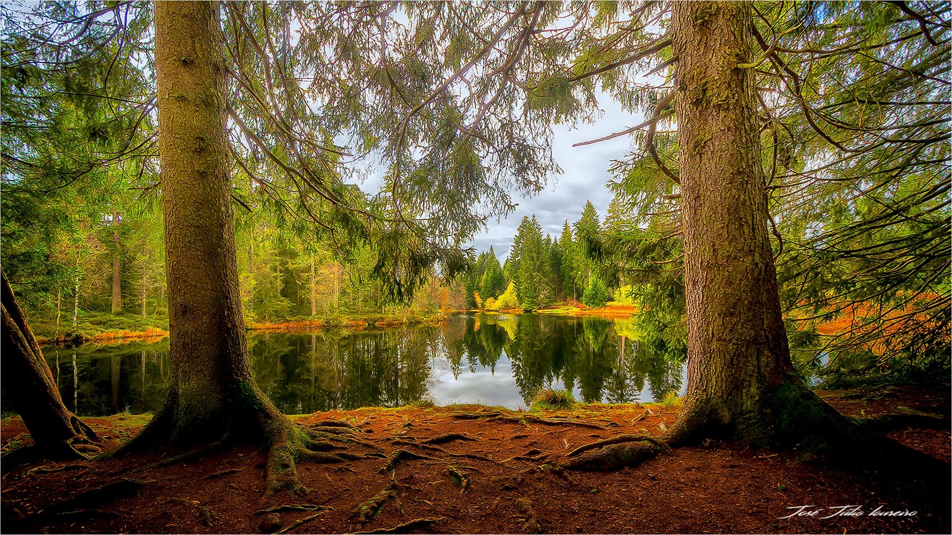 Paisagem Natural/Lac de la gruyere