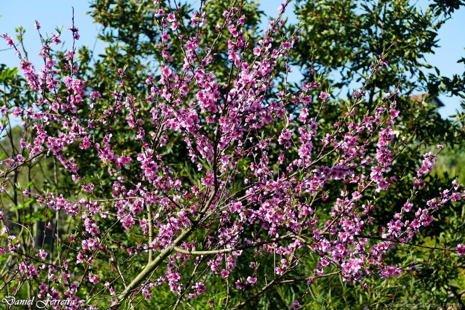 Paisagem Natural/Chegou a Primavera