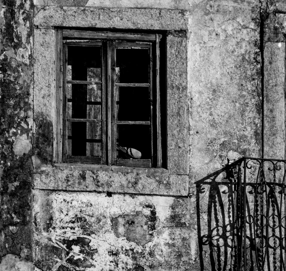 Paisagem Urbana/A pomba