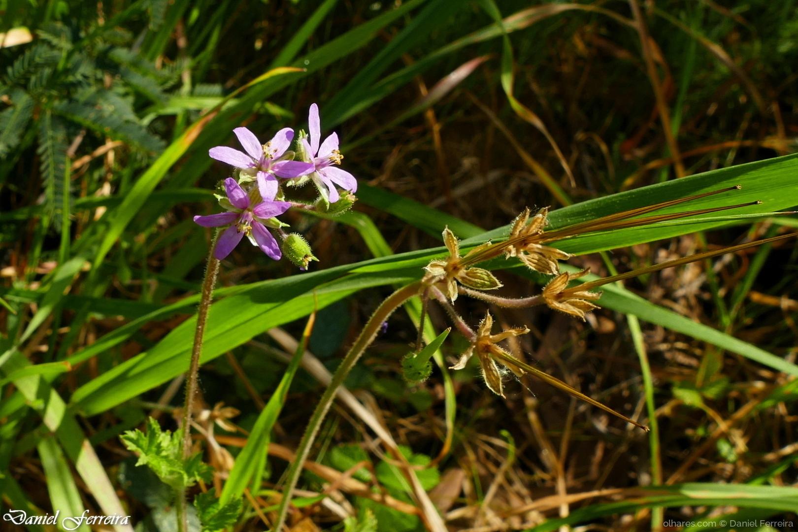 Macro/Pequena flor silvestre