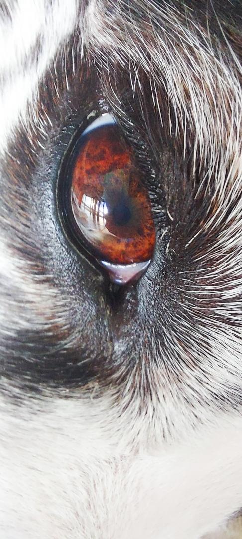 Animais/Olhar de um cão
