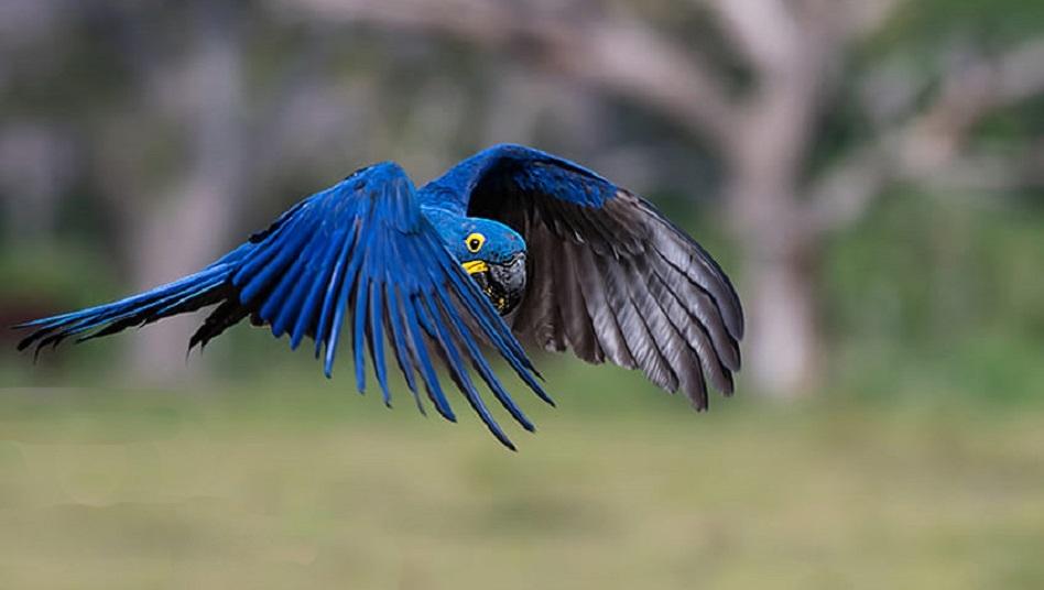 Paisagem Natural/Arara Azul