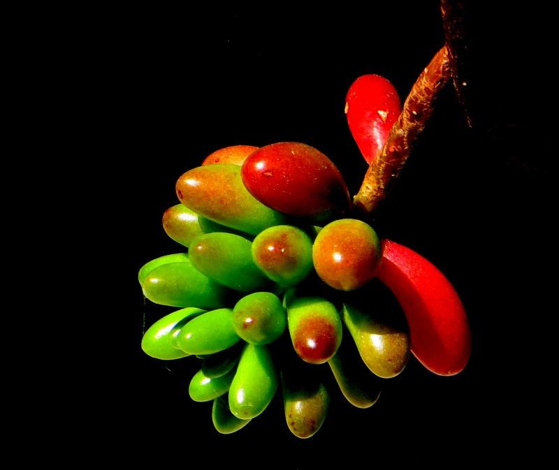 Macro/De verde a vermelho, sem ser semáforo