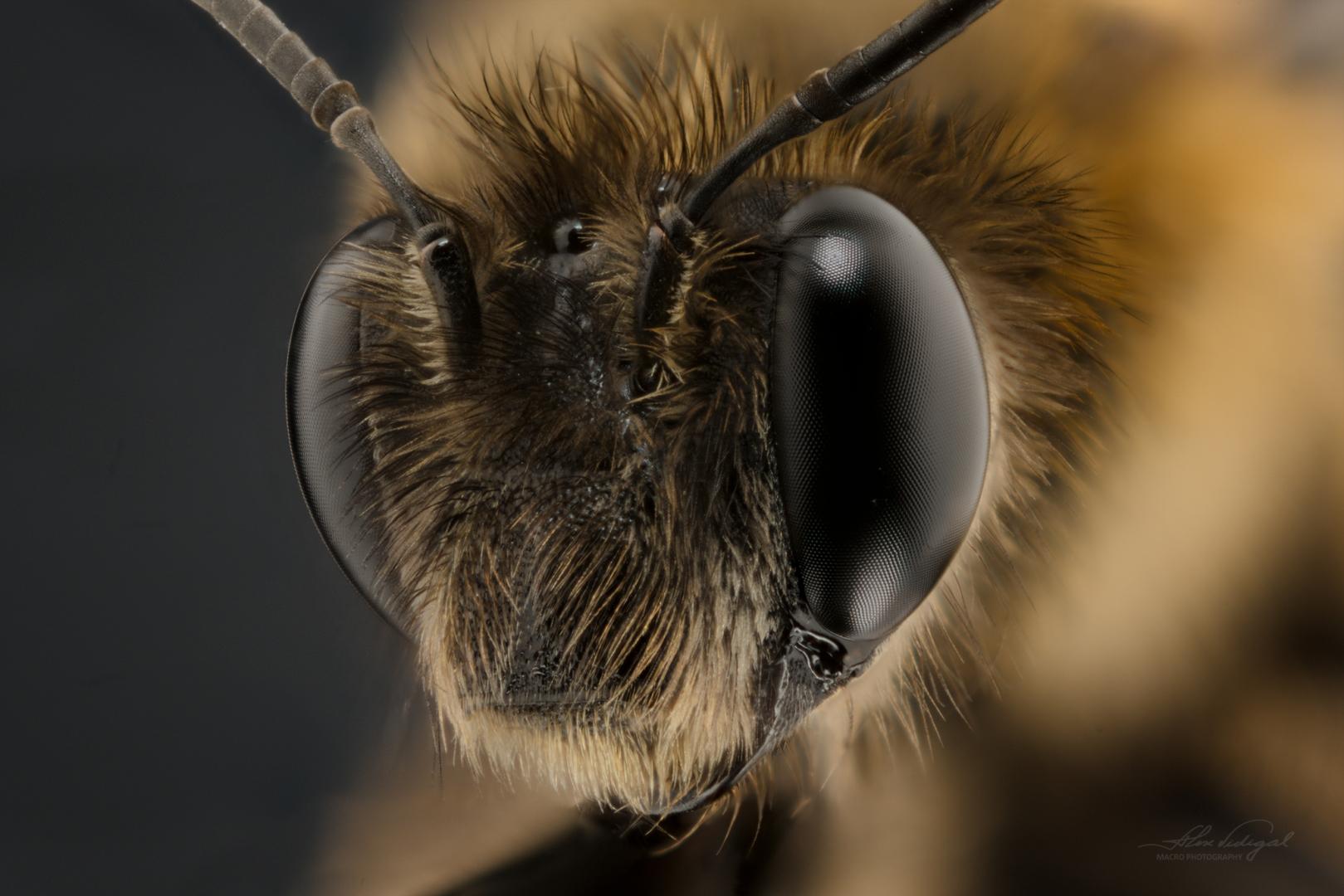 Macro/BEE II