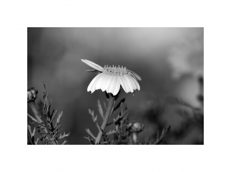 Paisagem Natural/(...)  poesia é algo absoluto ....