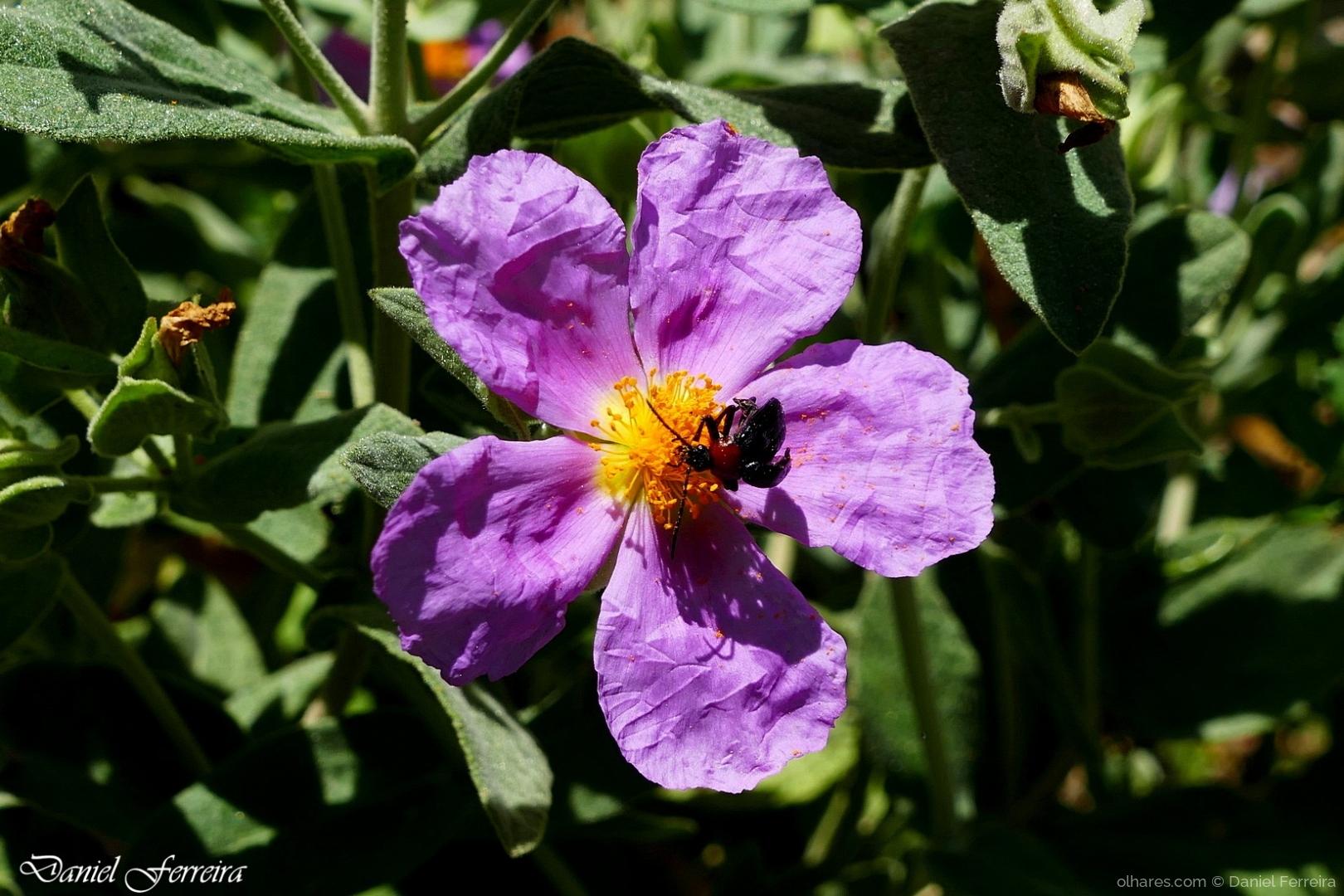 Macro/Flor de Primavera
