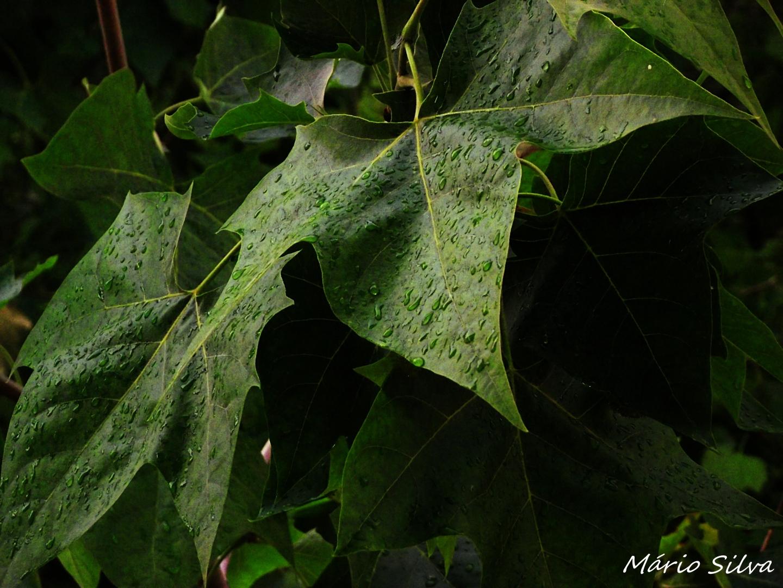Outros/São folhas! Apenas folhas!