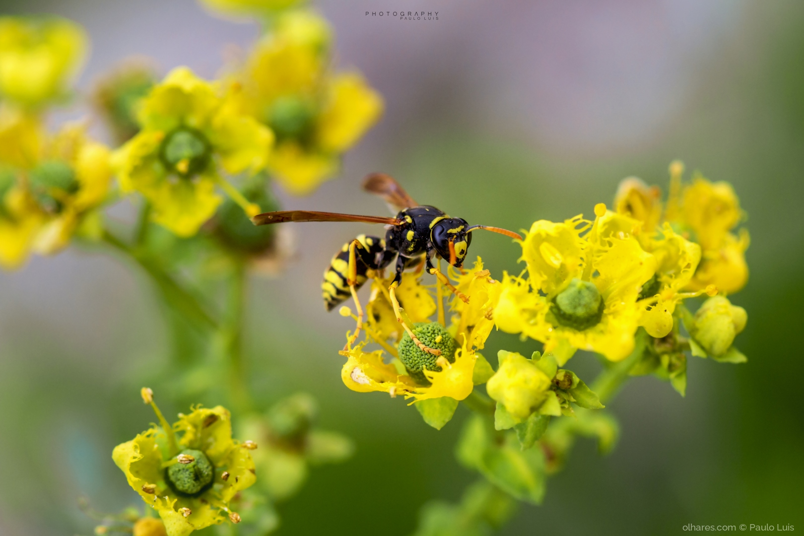 Macro/Trabalho de flor em flor