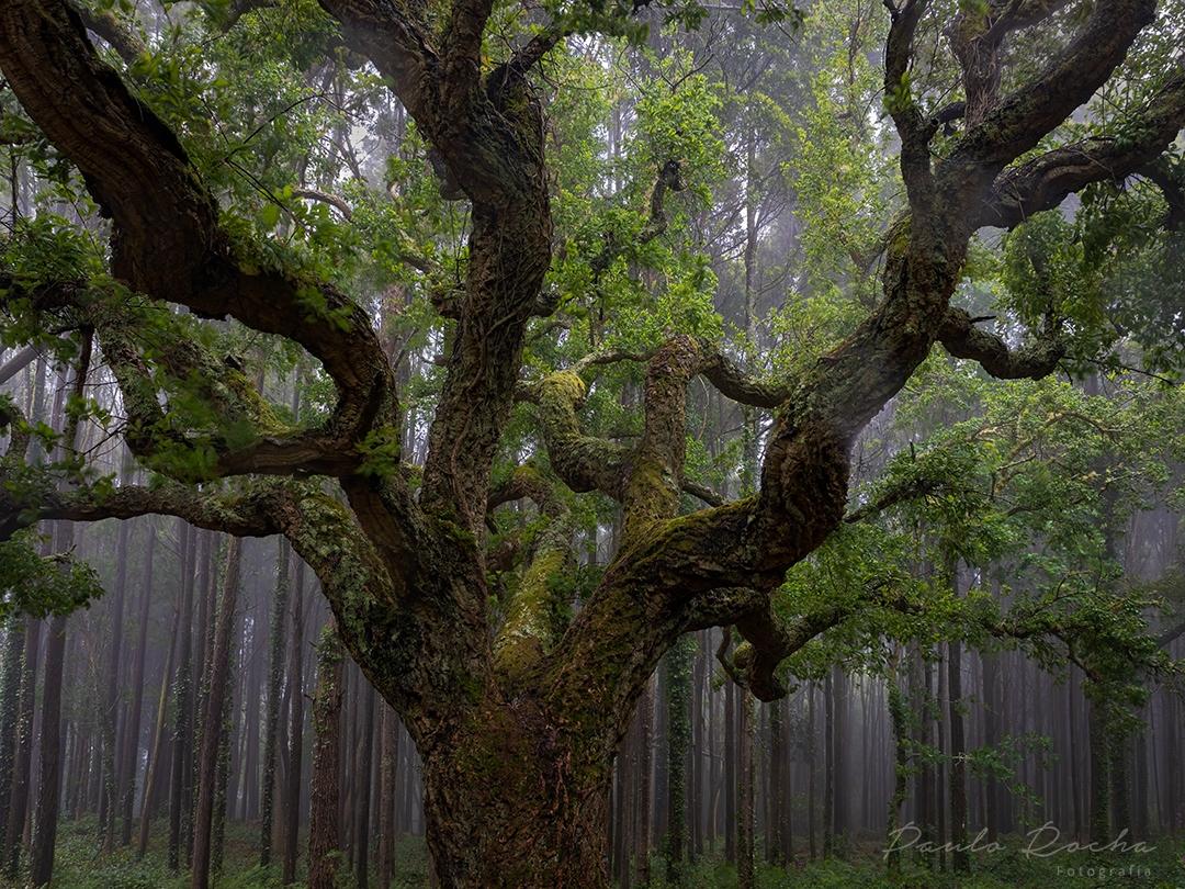 Paisagem Natural/Castanheiro na serra